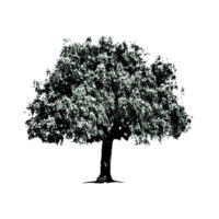 coark oak collection