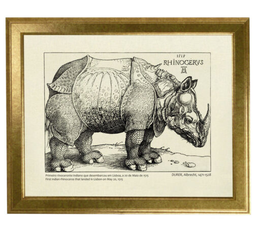 Rhinocerus Canvas framed