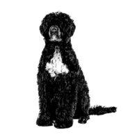 Portuguese water dog collection creative lisbon