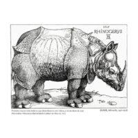 Rhinocerus collection