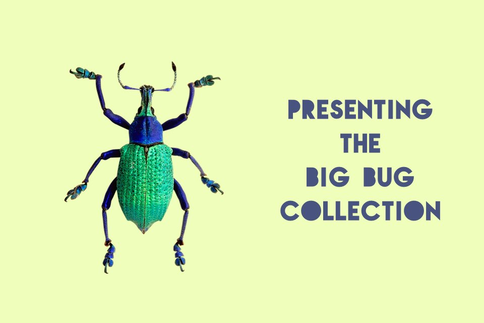 New Collection Big Bugs