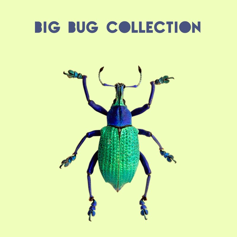 Big Bug collection