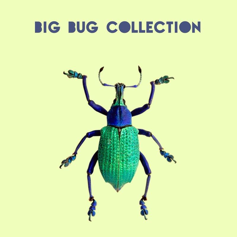 Big Bug collection