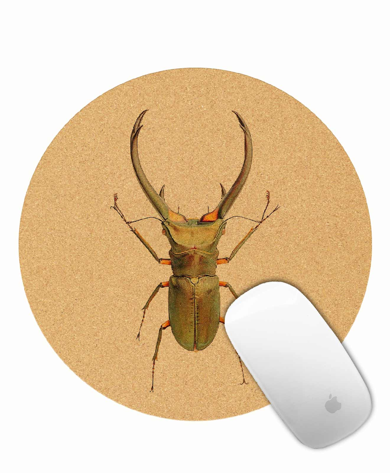 thursday-bug-cork-
