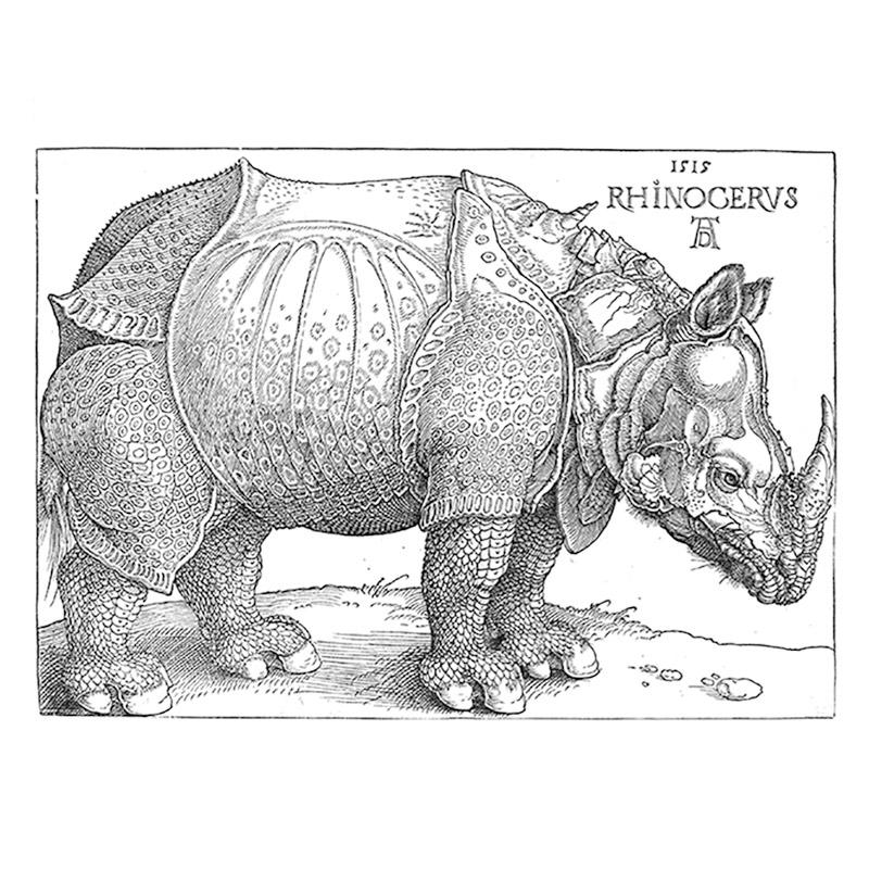 New Rhinocerus Collection