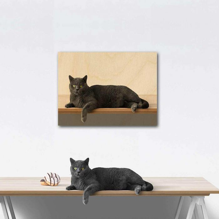 Relaxed Cat Wood Print